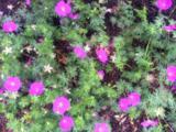 60 Little Herring Pond Rd - Photo 26