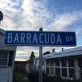 6 Barracuda - Photo 22