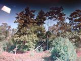 0 Canedy Woodlot - Photo 1