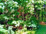 0 Sunny Brook - Photo 6