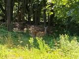 76 Wolcott Woods Lane - Photo 12
