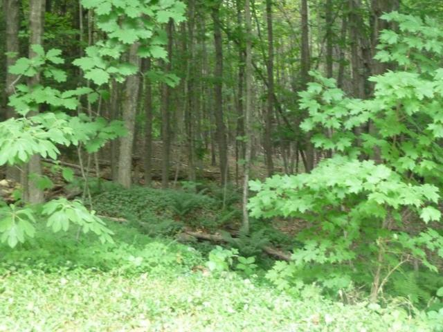 Lot 5 Mountain Road, Gill, MA 01354 (MLS #72294573) :: Commonwealth Standard Realty Co.