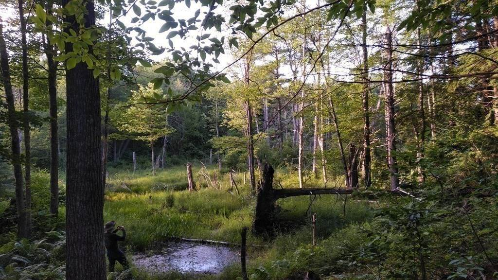 Lot 5 Forest Dr - Photo 1