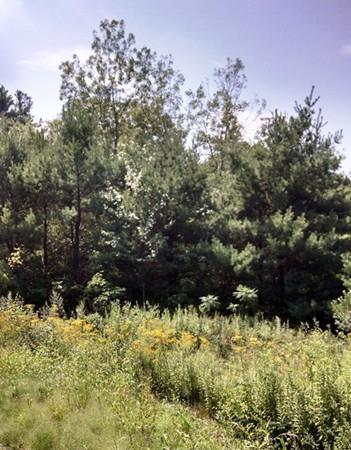 Lot 1 Oakhurst Road, Sutton, MA 01590 (MLS #72053338) :: Trust Realty One
