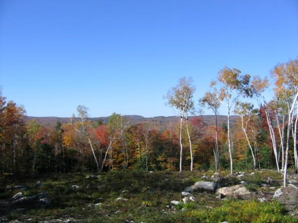 lot 55 Valley View Rd, Becket, MA 01223 (MLS #72427090) :: Apple Country Team of Keller Williams Realty