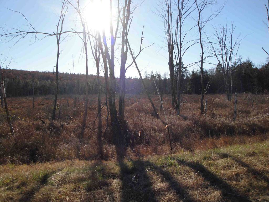 Lot 4&12 Rindge State Rd - Photo 1