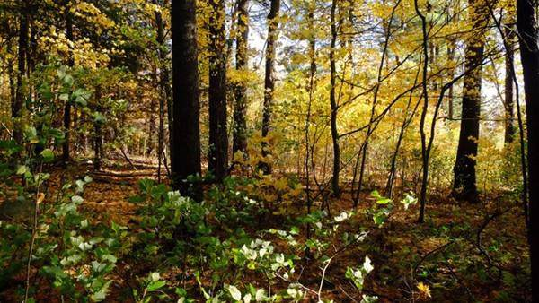 Lot 2 Florence Road, Northampton, MA 01062 (MLS #72584074) :: NRG Real Estate Services, Inc.