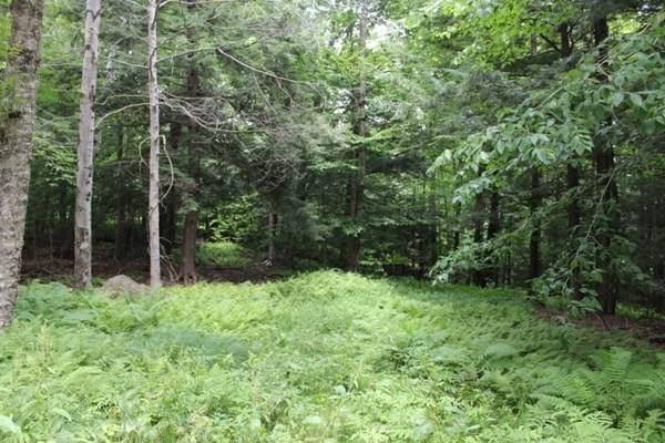Lot 51.1 Stone Hill Rd, Rowe, MA 01367 (MLS #72871478) :: The Smart Home Buying Team