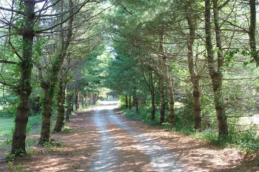 Lot 4C Blue Acres Way - Photo 1