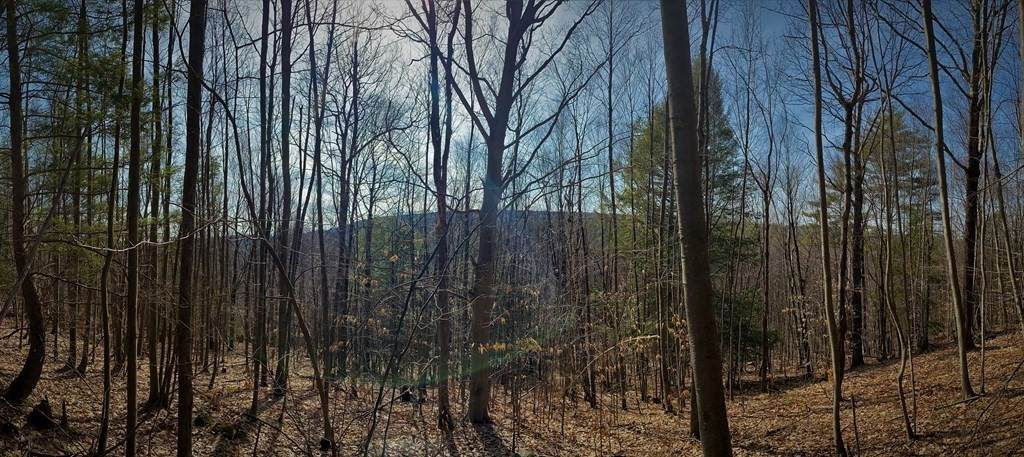 478 Fox Hill Rd - Photo 1