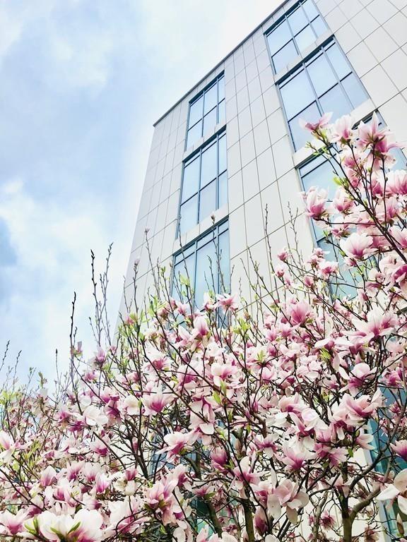 1 Earhart Street #103, Cambridge, MA 02141 (MLS #72485228) :: Welchman Real Estate Group | Keller Williams Luxury International Division