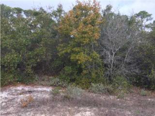 0 River Rd, Orange Beach, AL 36561 (MLS #542963) :: Jason Will Real Estate