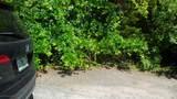 137 Seameadow Drive - Photo 1