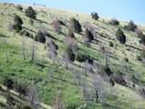 468 Mt Hwy 84 - Photo 6