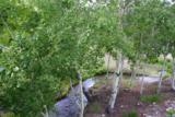 2644 Fork Little Sheep Creek - Photo 27