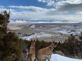 Lot 136 Shining Mountains I - Photo 16