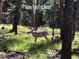 207 Silvertip Trail - Photo 3