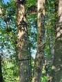14281 Cottonwood - Photo 43