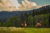 Lot 9A Sun West Ranch - Photo 4
