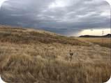Lot 67 Rolling Prairie Way - Photo 2
