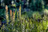 TBD Wilderness Ridge Trail - Photo 11