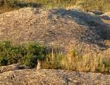 nhn Blue Mountain Dr, Wheatland, Wyoming - Photo 32