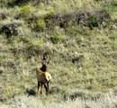 nhn Blue Mountain Dr, Wheatland, Wyoming - Photo 33