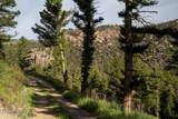 TBD Mol Heron Creek Road - Photo 37