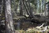 0 North Camp Creek Road - Photo 31