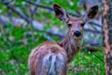 69a Clear Creek Trail - Photo 5