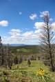 9741 Alice Creek Road - Photo 12