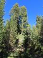TBD Buck Ridge Trail - Photo 7