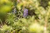 14 Beehive Basin - Photo 20