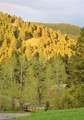 3300 Cottonwood Ranch Trail - Photo 4