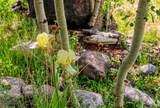 1063 Clear Creek Trail - Photo 31