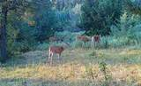 1270 Nevada Creek Ranch Drive - Photo 11