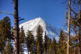 135 Old Moose Fork - Photo 9