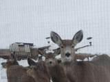 55 Deer Lane - Photo 40