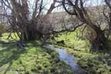 61 Swamp Creek - Photo 20