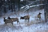 335 Silvertip Trail - Photo 26