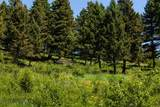 7003 Bridger Canyon Road - Photo 46