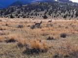 TBD Wild Horse Meadow - Photo 25