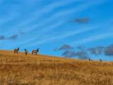 TBD Wild Horse Meadow - Photo 26