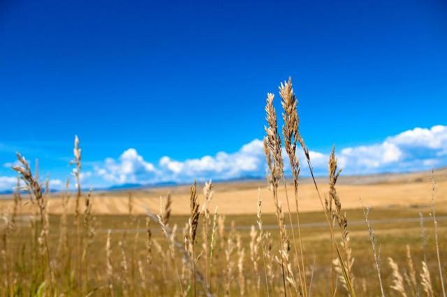 Lot 76 Wheatland Meadows Drive, Three Forks, MT 59752 (MLS #305560) :: Black Diamond Montana