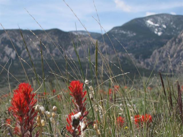 nhn Horny Toad Trail S, Red Lodge, MT 59068 (MLS #312182) :: Black Diamond Montana