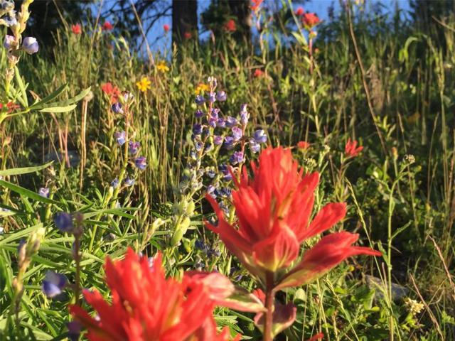 Spring Creek Reserve Spring Creek Reserve 208, Big Sky, MT 59716 (MLS #324534) :: Black Diamond Montana