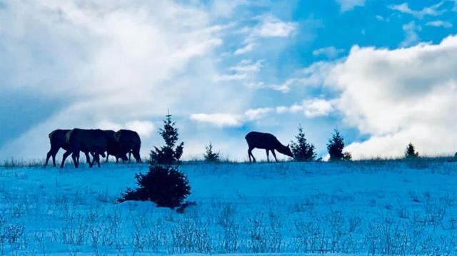 2449 Wild Horse Meadow, Ramsay, MT 59711 (MLS #331428) :: Black Diamond Montana