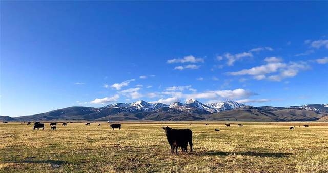TBD Chute Canyon Ranch, Lima, MT 59739 (MLS #345256) :: Montana Life Real Estate