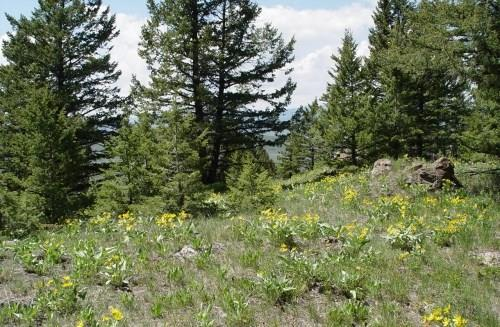 Lot 13 Sportsman's Paradise - Wagon Track, Cameron, MT 59720 (MLS #300855) :: Montana Life Real Estate