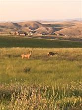 Lot 39 Mountain View Estates, Three Forks, MT 59752 (MLS #330507) :: Hart Real Estate Solutions